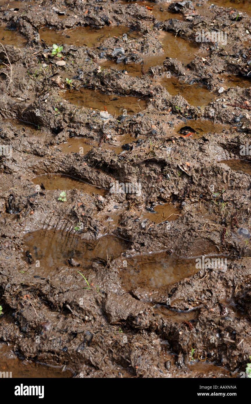 Muddy footprints - Stock Image