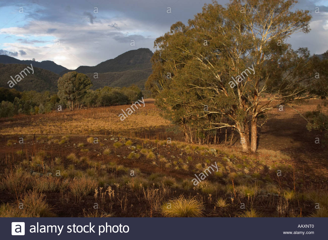 The sun just coming out after an afternoon shower at Camp Blackman in Warrumbungle National Park New South Wales Australia - Stock Image