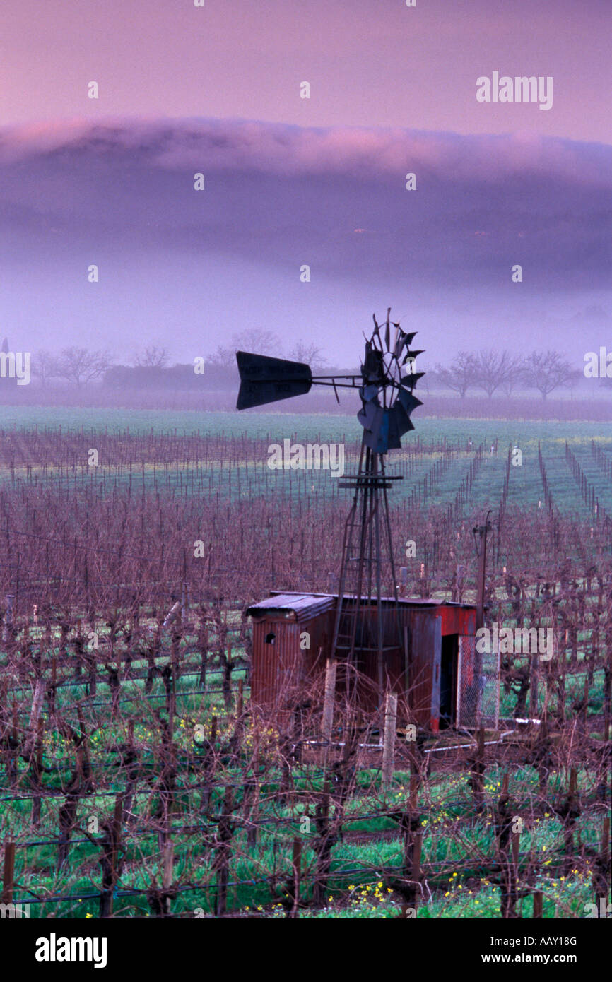 Old Windmill in Napa Valley Vineyards in winter with fog rolling over coastal hills vertical Stock Photo
