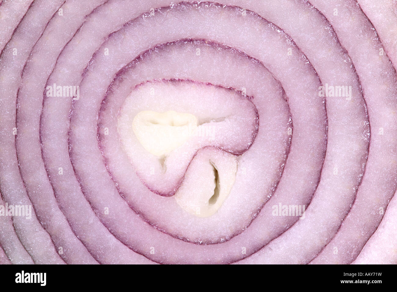 Macro shot of the inside a Red Onion - Stock Image