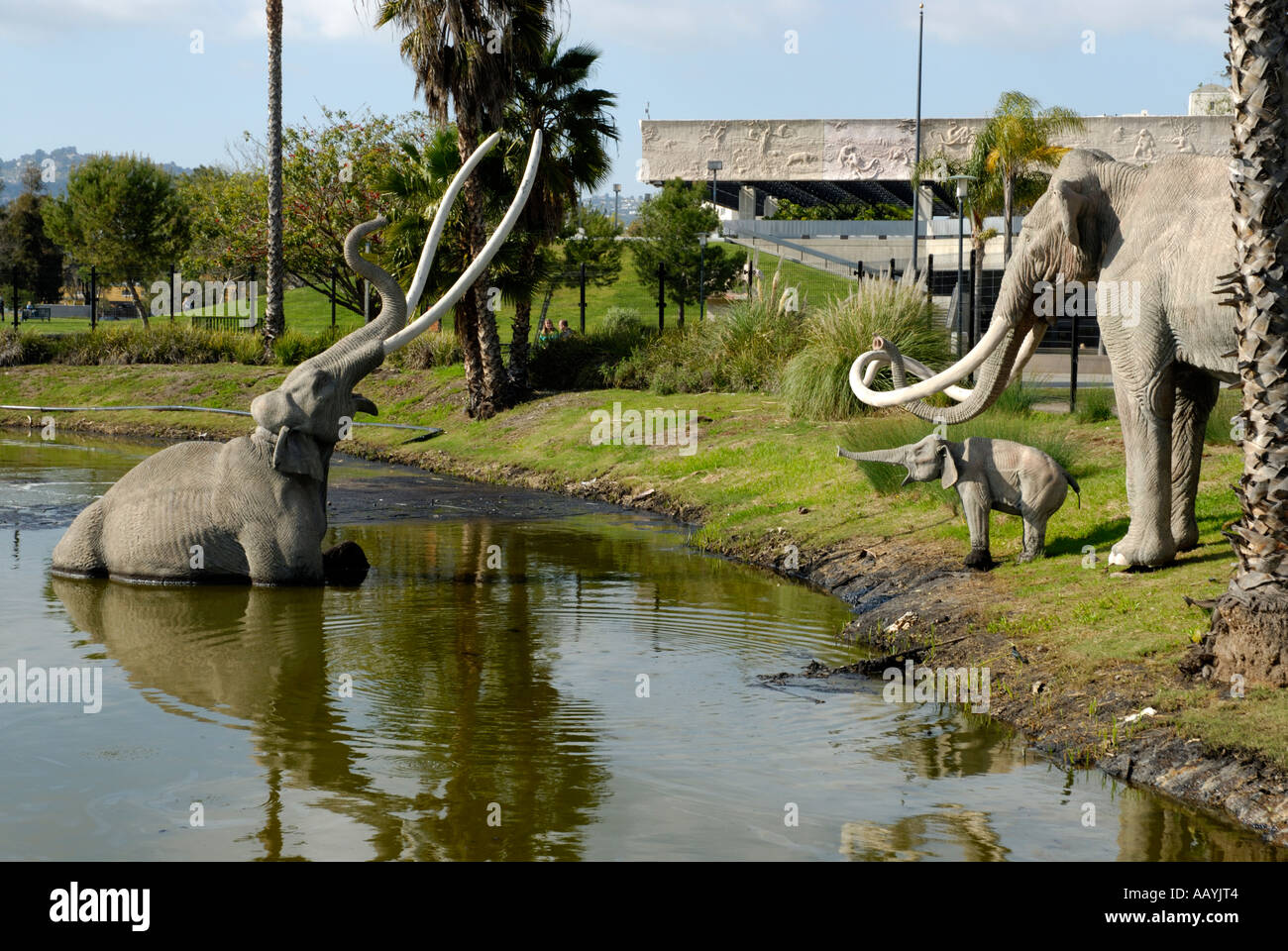 Reproductions, models, of extinct Coumbian Mammoths, Mammuthus columbi, in front of the Page Museum, Los Angeles, California - Stock Image