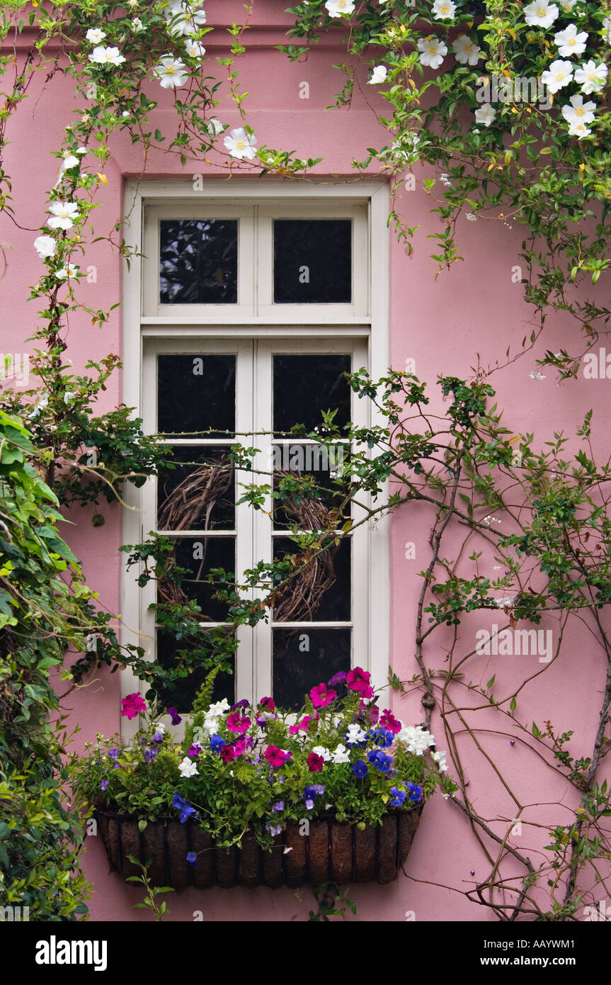 Petunia Pansy and other Flowers in Window Box Charleston South Carolina Stock Photo