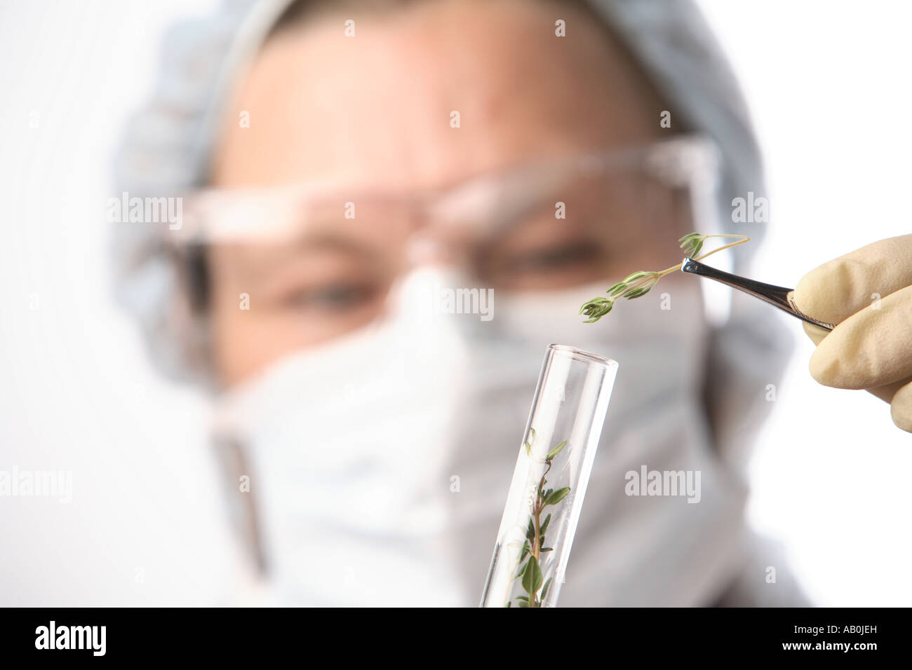 Woman in laboratory examines plant material - Stock Image