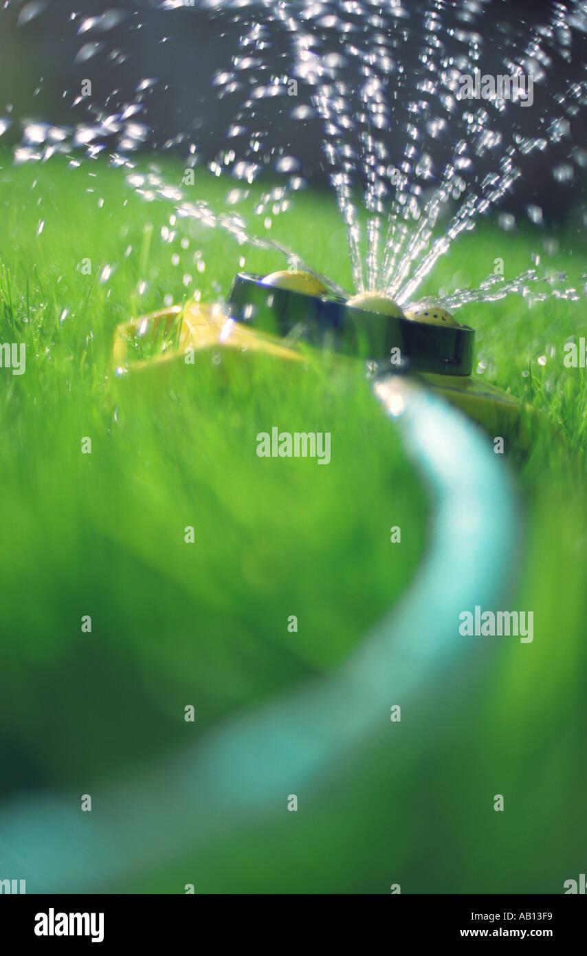 Sprinkler watering grass - Stock Image