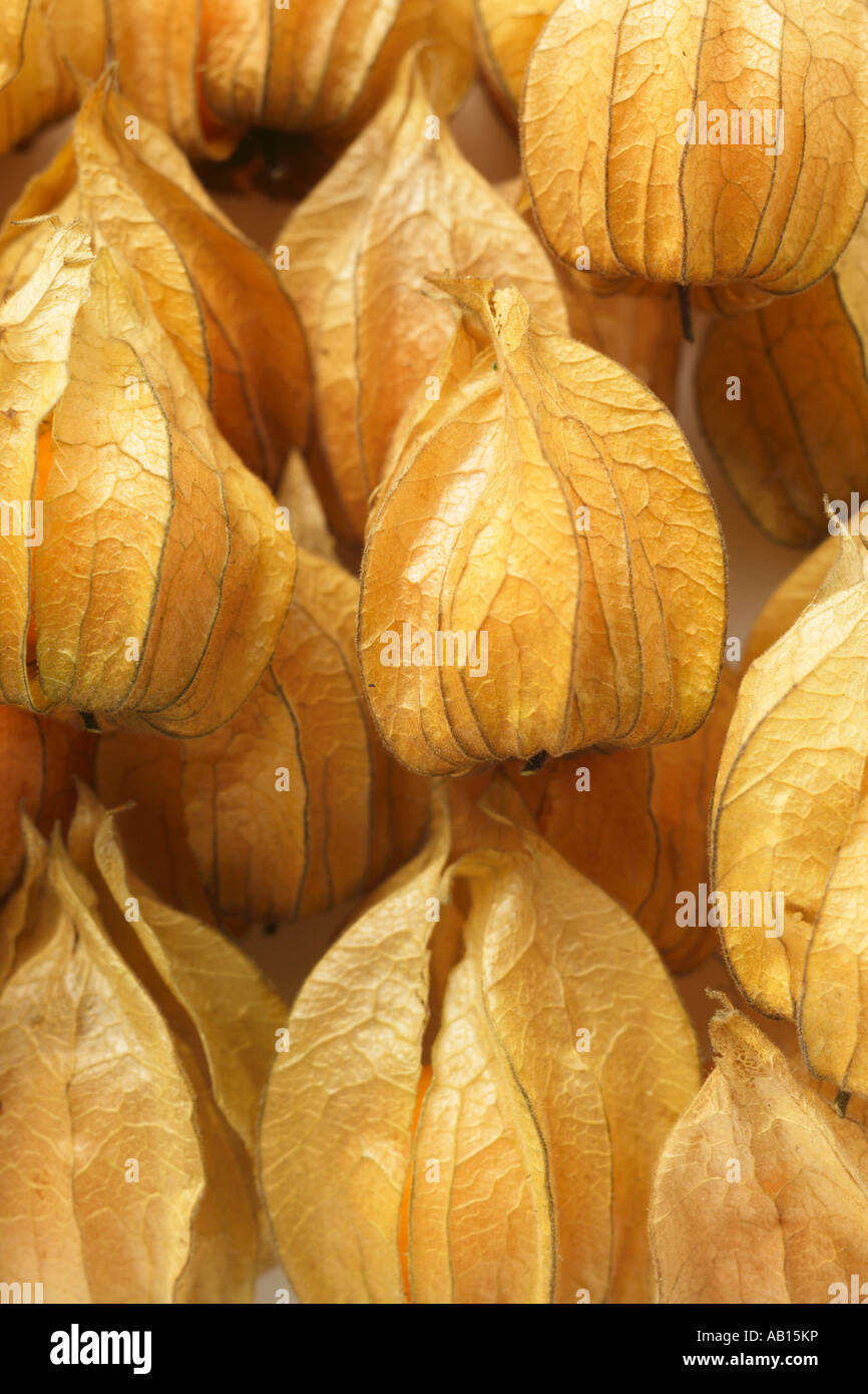 Several Physalis with calyxes close up FoodCollection - Stock Image