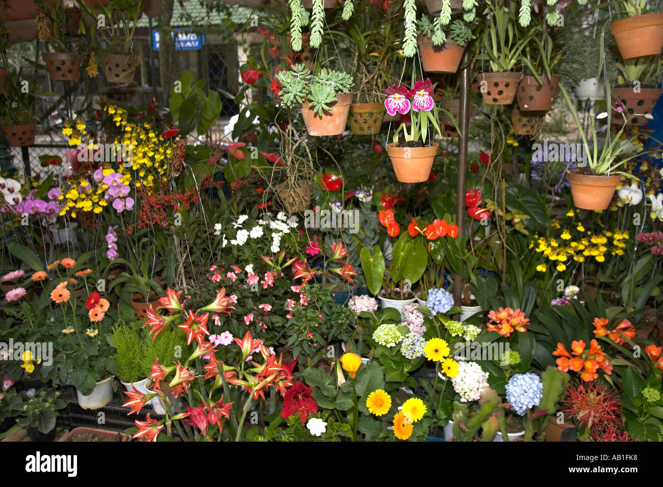 Colourful tropical flowers and plants at one of a number of similar ...
