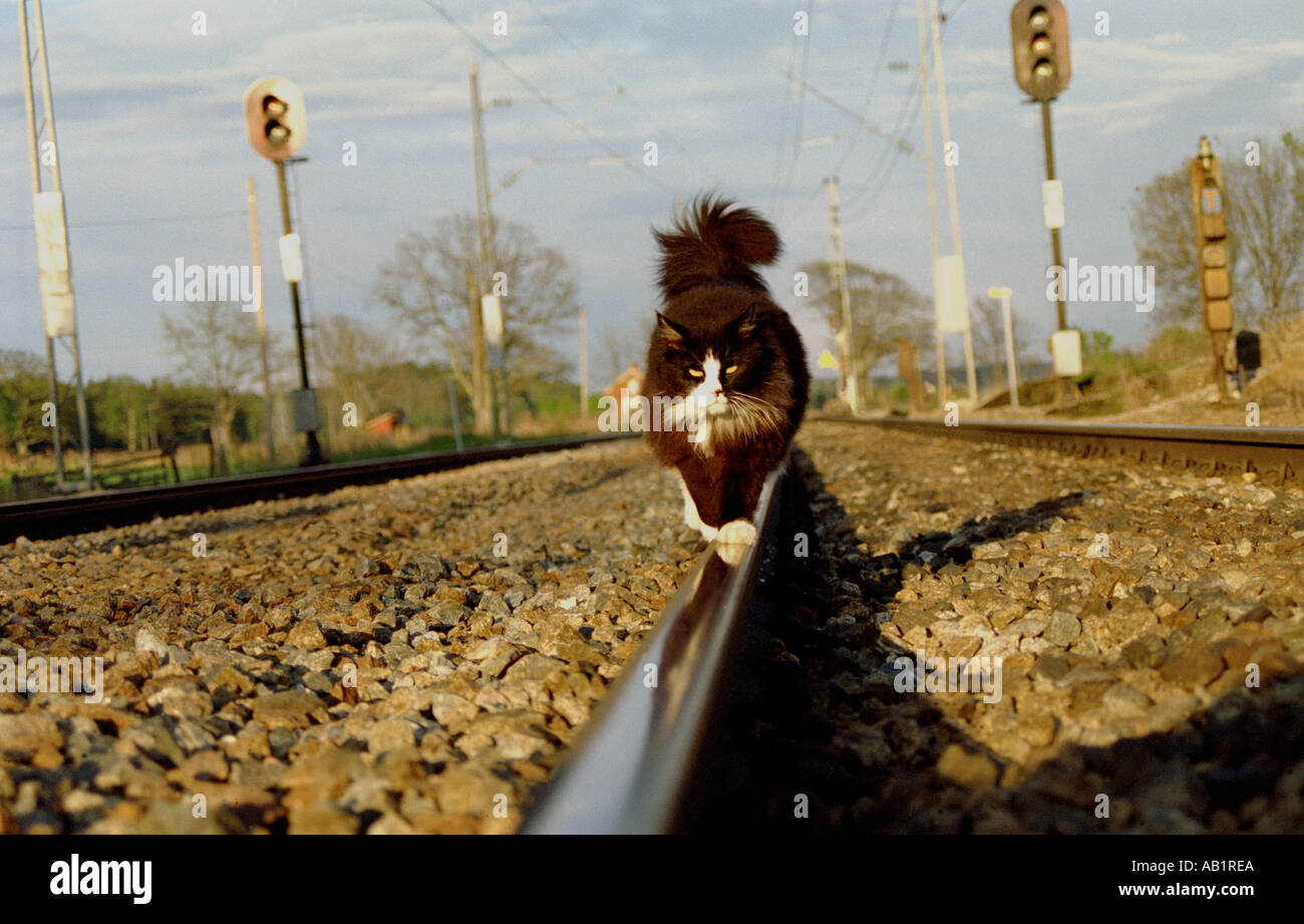 Cat walking on the railroad track at Dilling in Rygge kommune, Østfold fylke, Norway. - Stock Image