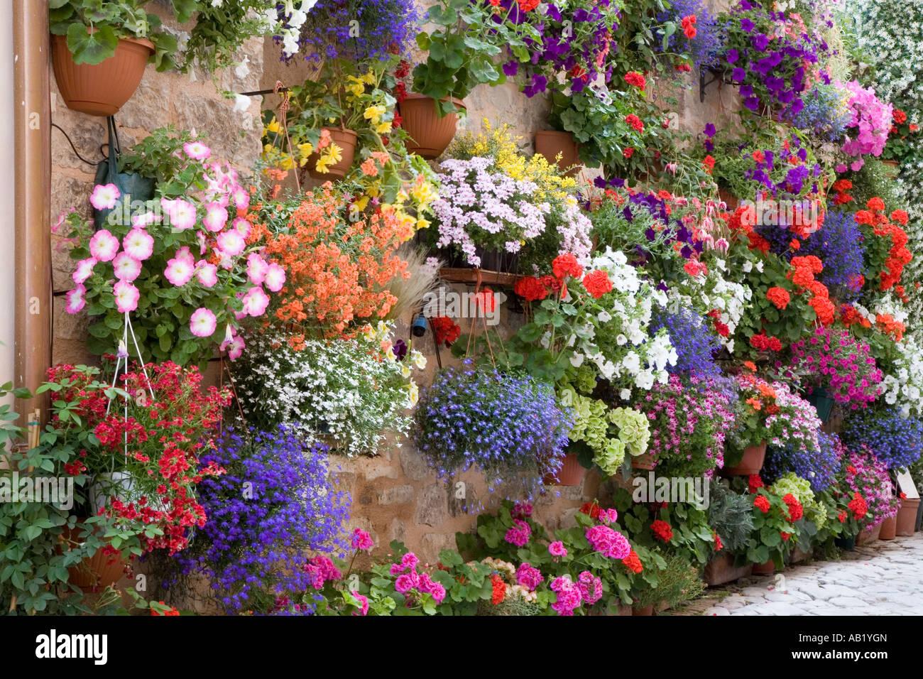 wall hanging baskets petunia bouquet fresh growing ornamental stock photo 12750836 alamy. Black Bedroom Furniture Sets. Home Design Ideas
