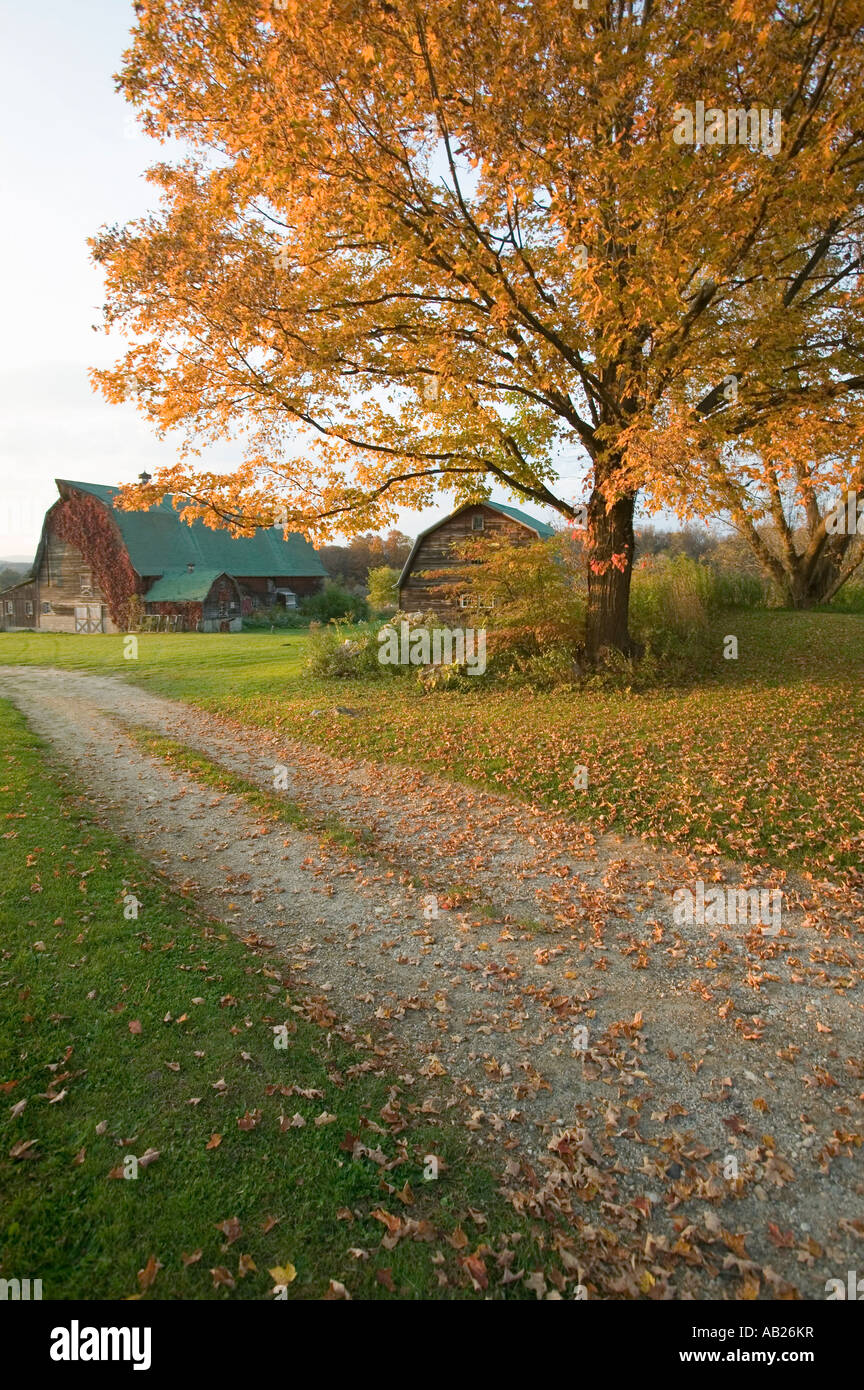 Autumn leaves red barn and dirt path in Litchfield Hills of Connecticut - Stock Image