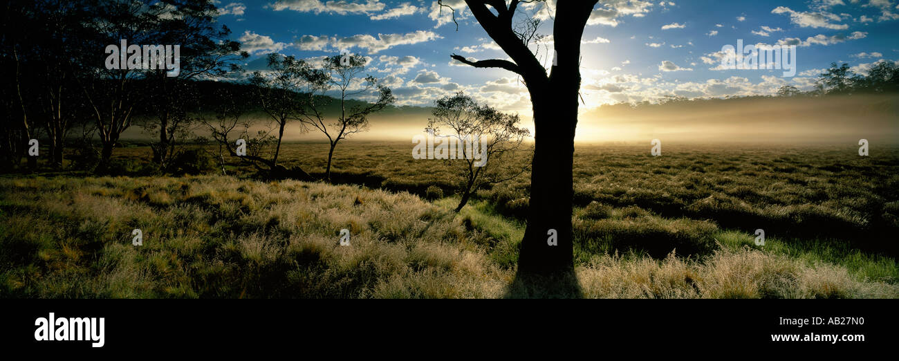 Dawn at Polblue Marsh Barrington Tops National Park New South Wales Australia - Stock Image