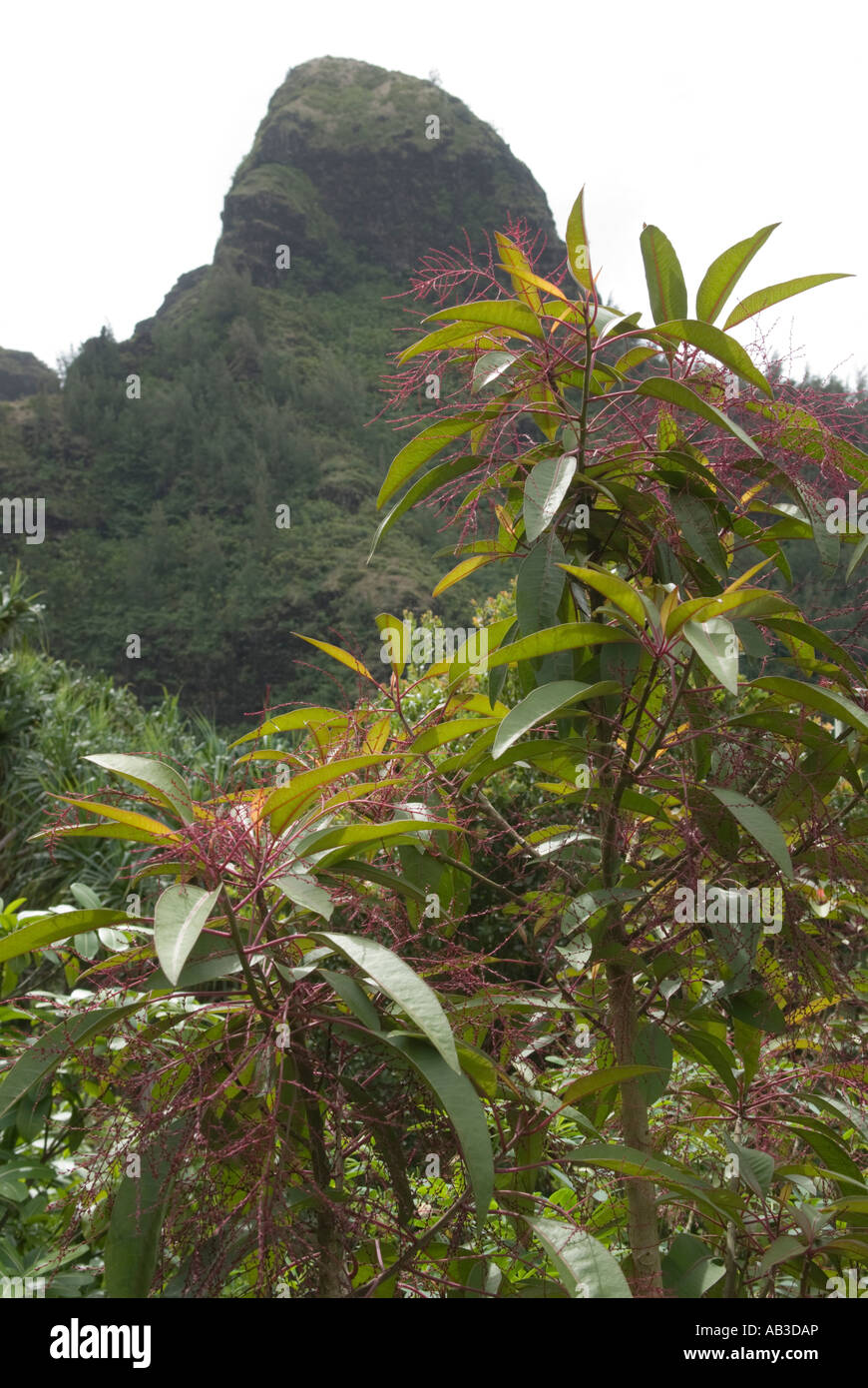 Limahuli Garden And Preserve Stock Photos & Limahuli Garden And ...