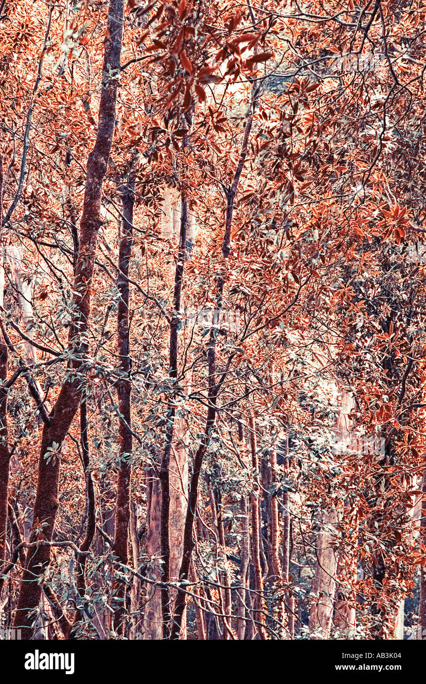 Abstracted treescape - Stock Image
