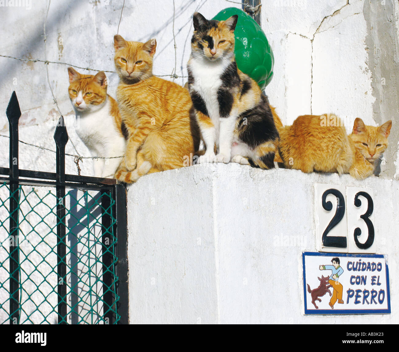Four street cats sitting above Spanish language sign which translates Beware of the Dog - Stock Image