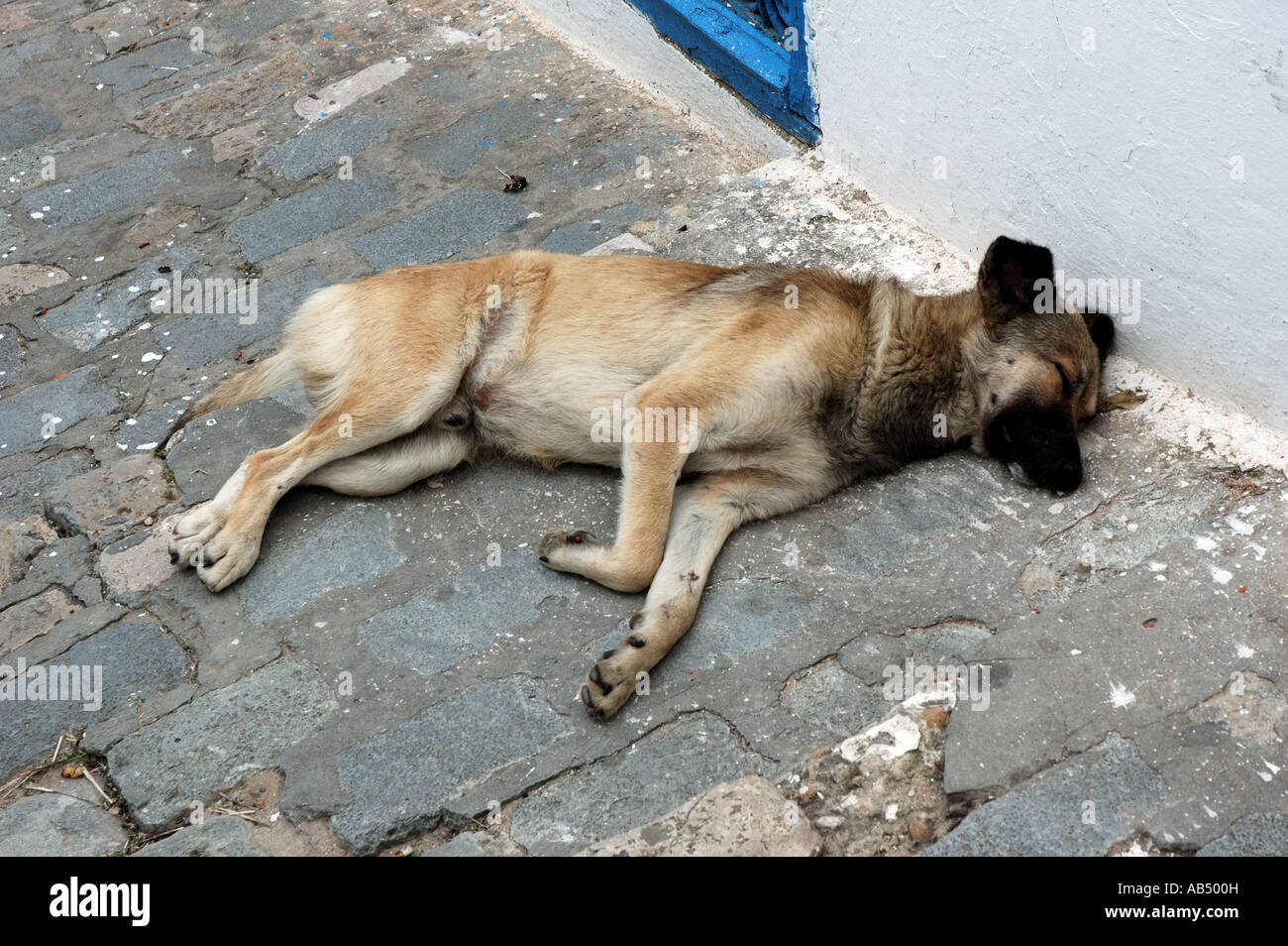 Sleeping dog in Sidi Bou Said, Tunisia - Stock Image