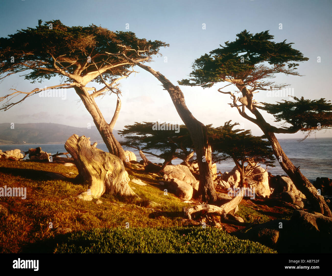 Coast on Seventeen Mile Drive near the Lone Cypress Carmel California USA - Stock Image