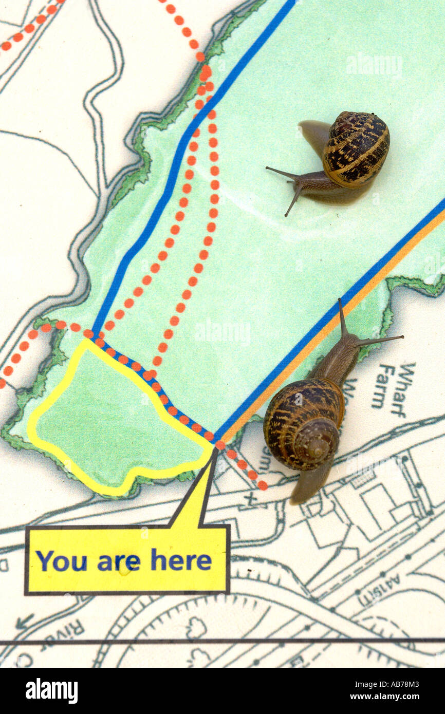 Garden snail Helix aspersa on map display panel North Meadow National Nature Reserve Cricklade Wiltshire - Stock Image