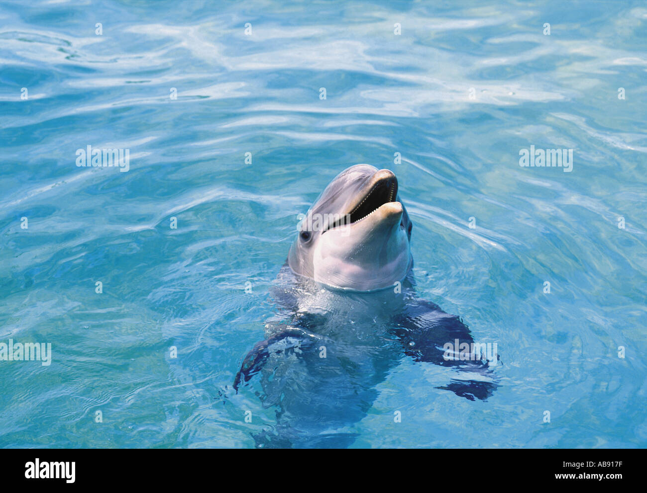 Anatomy Dolphin Stock Photos & Anatomy Dolphin Stock Images - Alamy