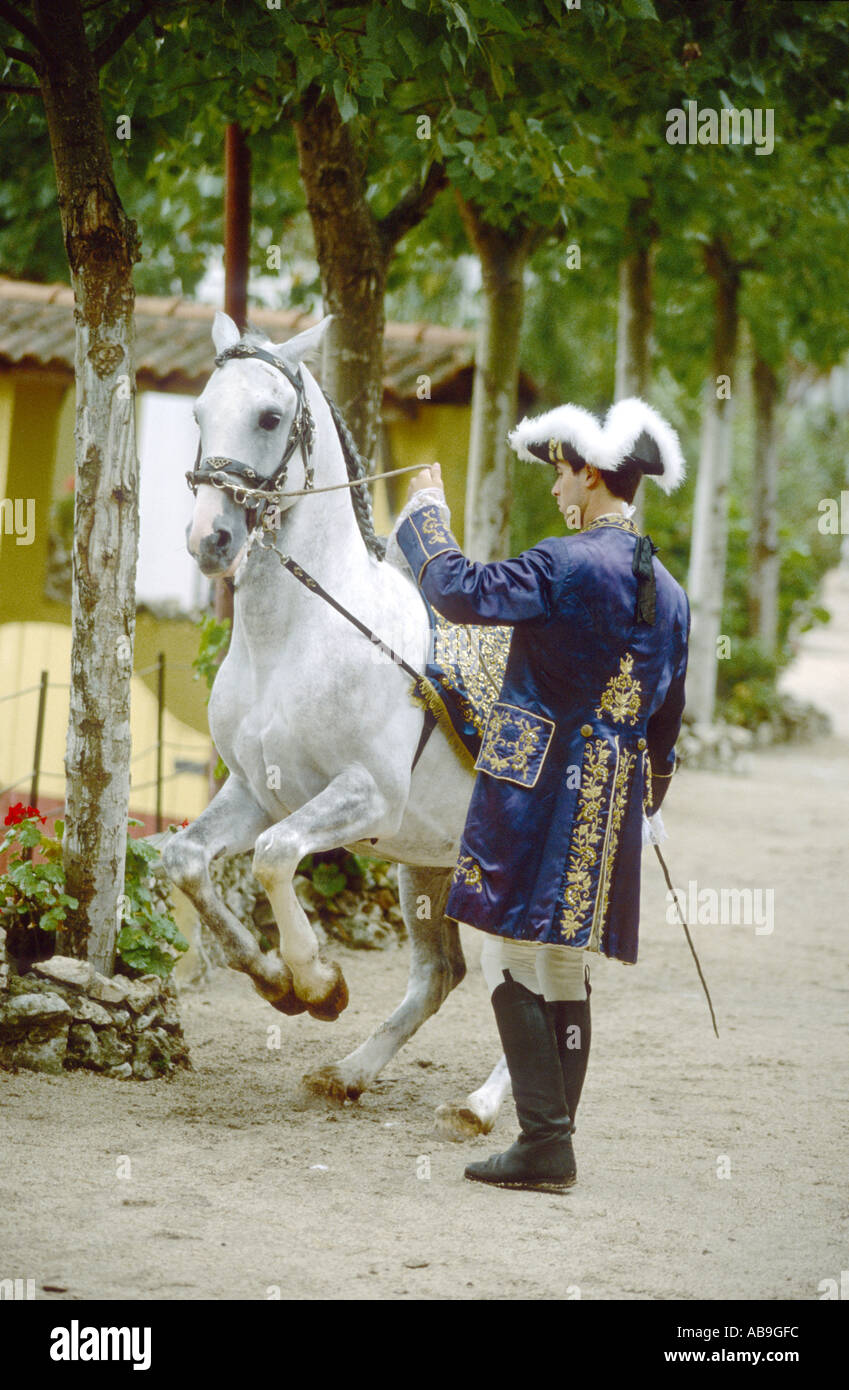 Lusitano horse (Equus przewalskii f. caballus), training of levade: the horse rises on its haunches to an angle of approximatel - Stock Image