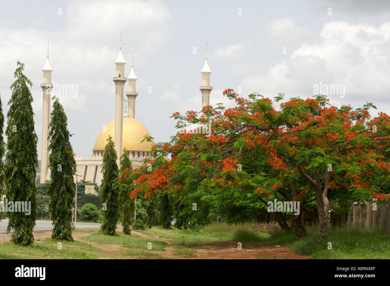 Royal Poinciana flamboyant tree with Nigerian National mosque - Stock Image