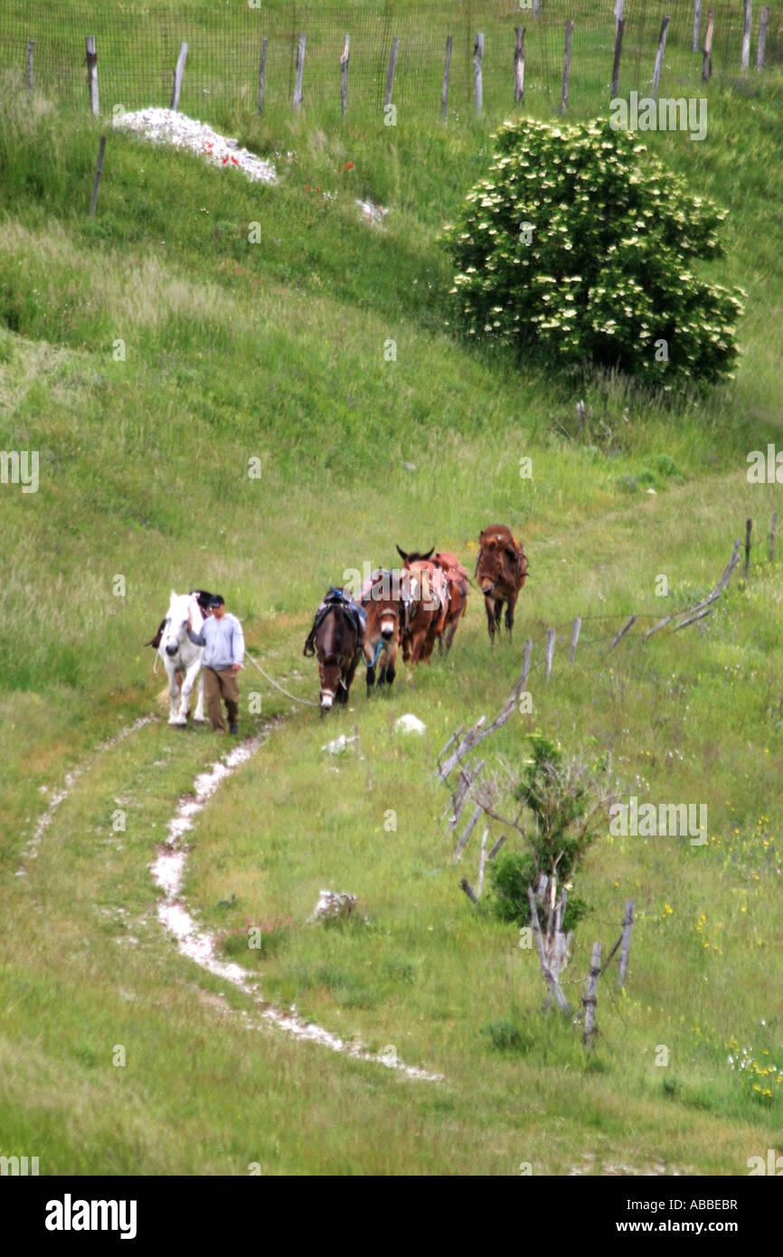 mule trekking on the Piano Grande near Castelluccio in the Sibillini National Park,Le Marche,the Marches,Umbria,Italy Stock Photo