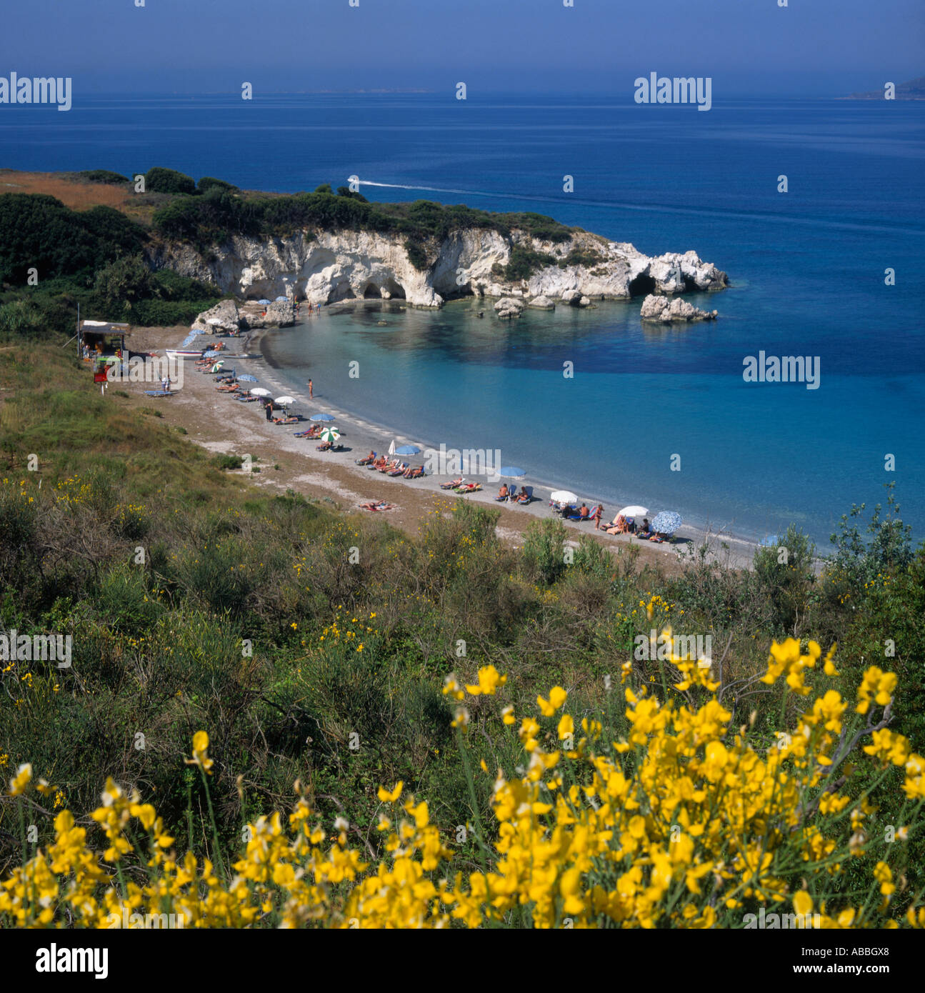 West Coast bay with sun-beds umbrellas people and yellow flowers in foreground Kalamia Beach Cephalonia Island Greek Islands - Stock Image