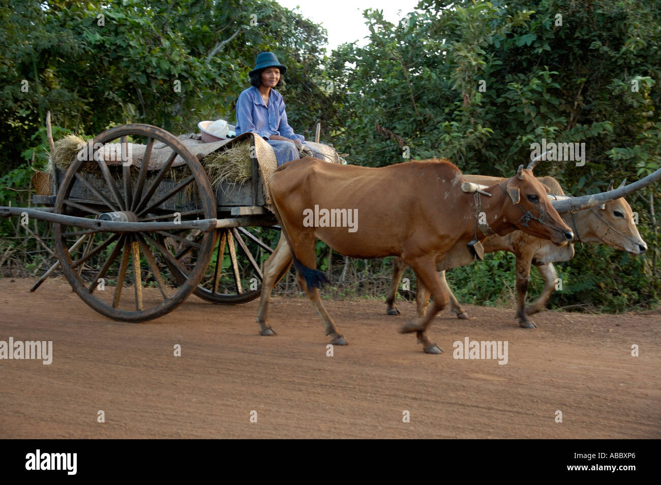 Archaic transportation woman on ox cart near Kompong Thom Cambodia - Stock Image