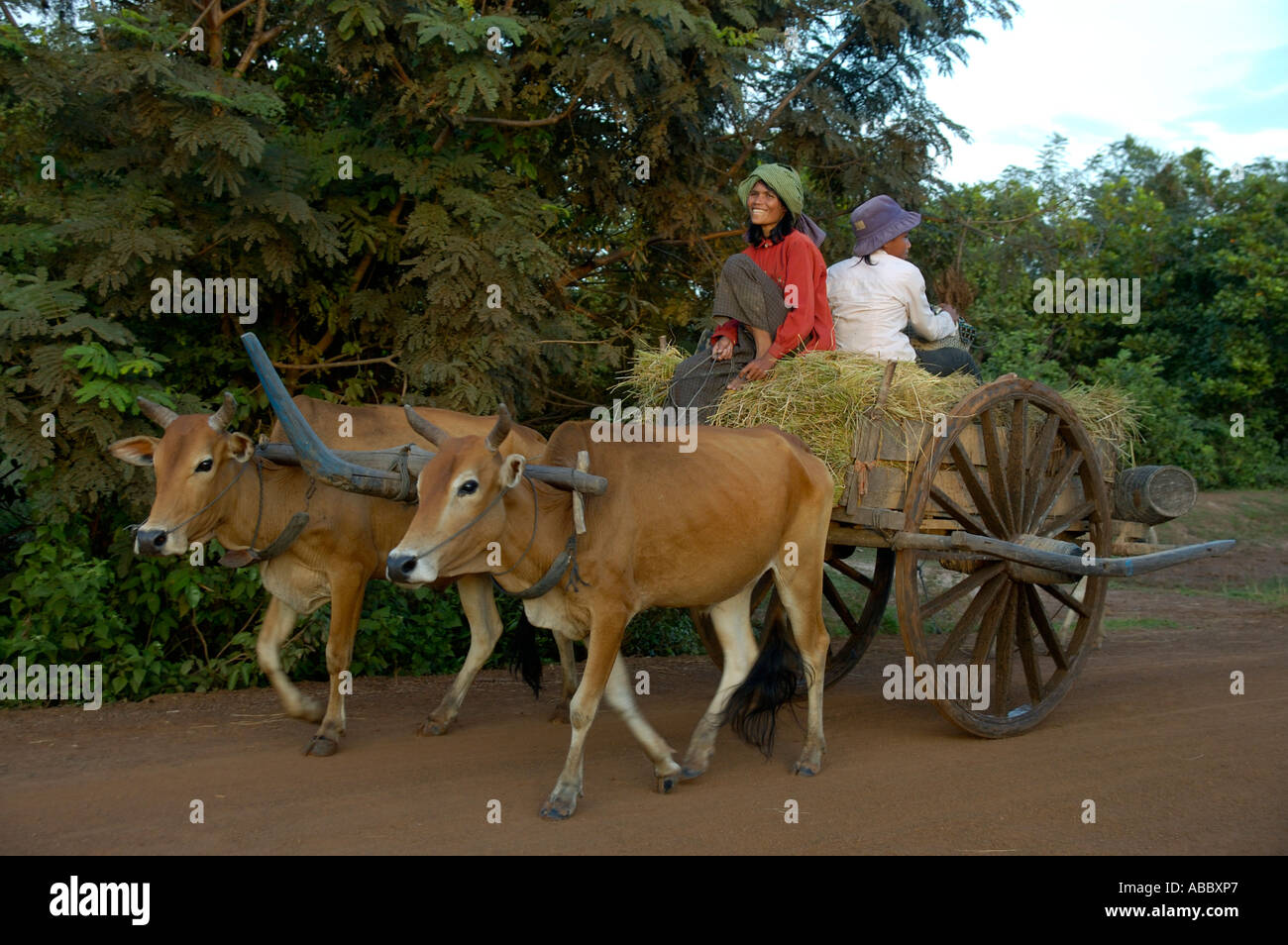 Archaic transportation women on ox cart near Kompong Thom Cambodia - Stock Image
