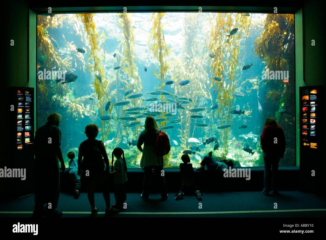 Birch Aquarium At Scripps La Jolla California SD  - Stock Image