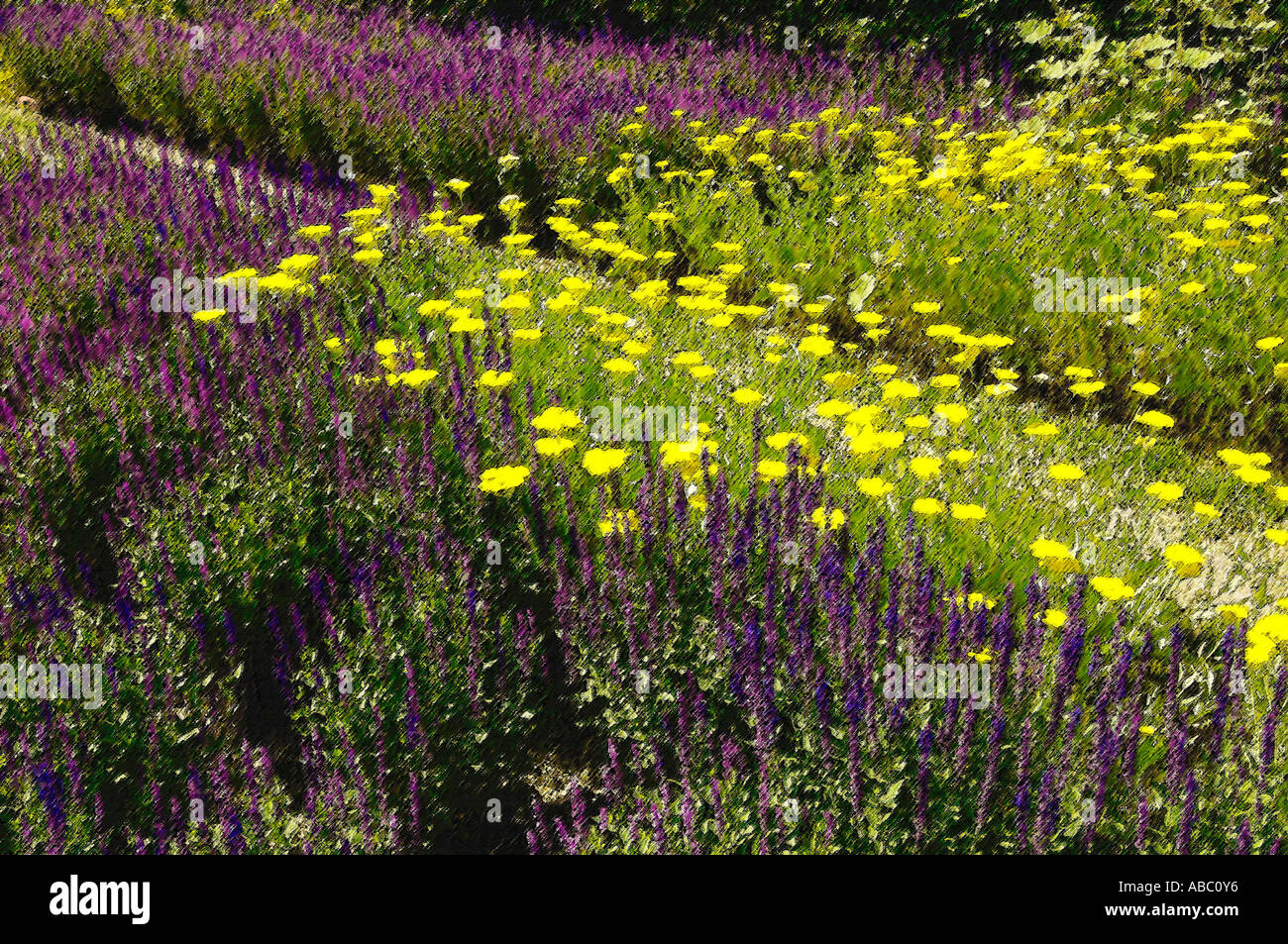 Flowers at the BUGA Munich 05, Photoshop-artistic-filter, - Stock Image