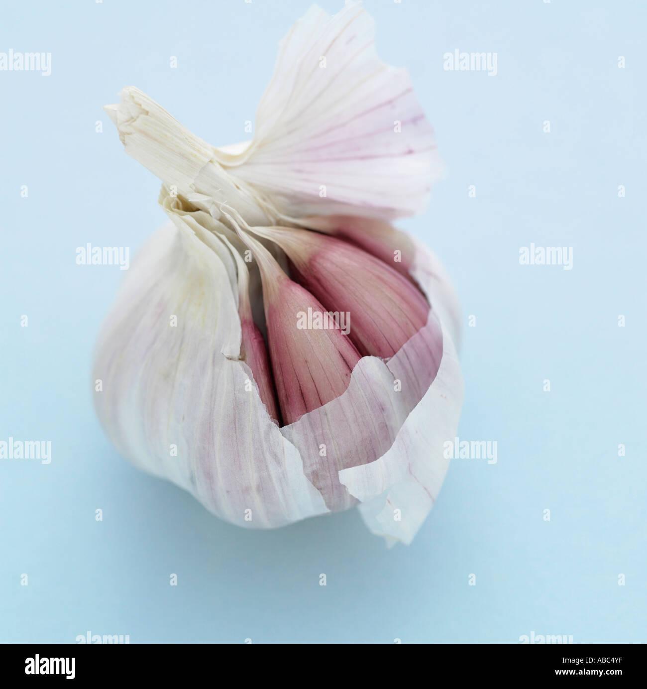 Garlic on pale blue background - Stock Image