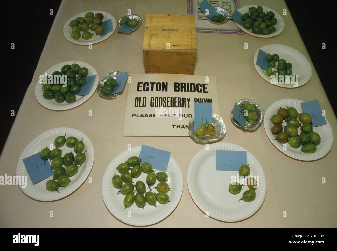 Egton Bridge Gooseberry show Yorkshire England. The competition table. Winning gooseberries HOMER SYKES - Stock Image