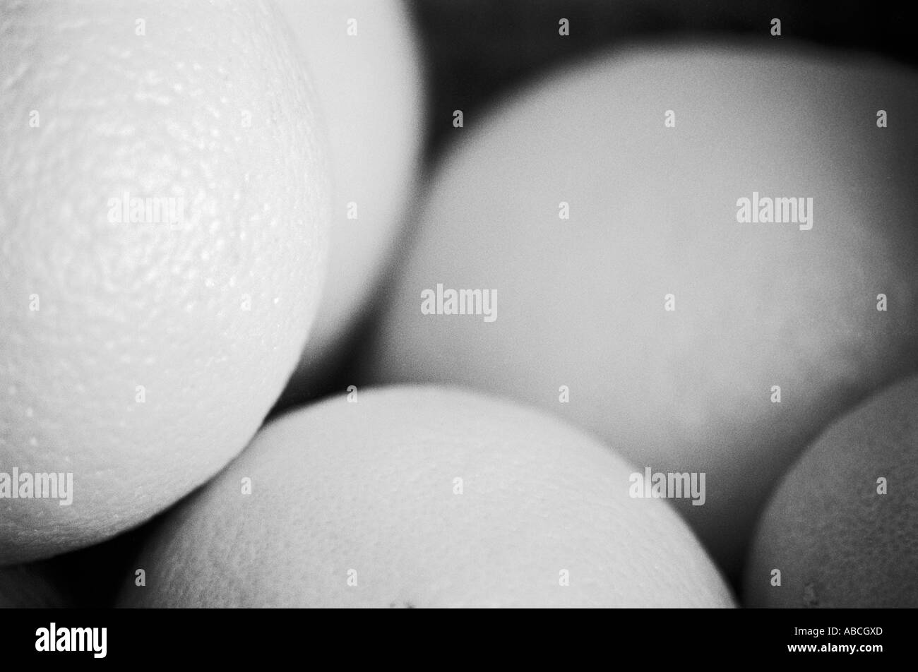 Macro close up of Oranges - Stock Image