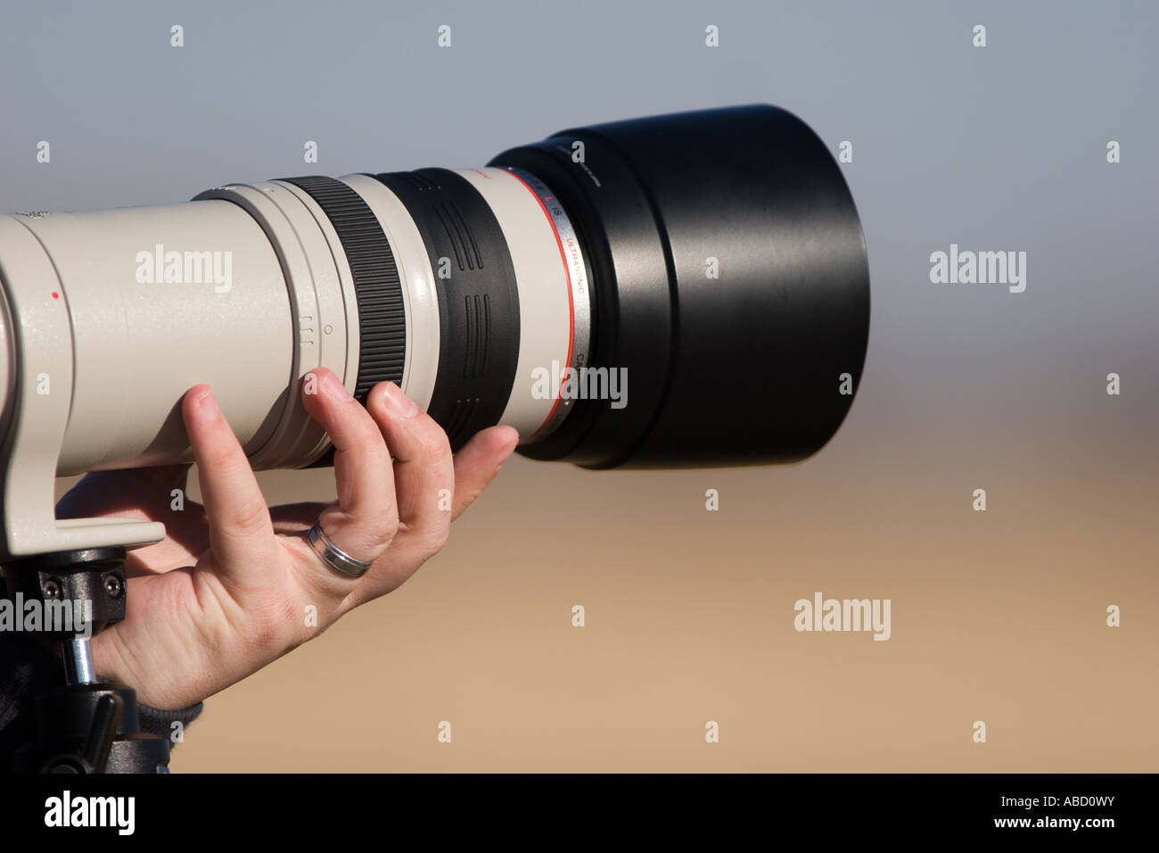 A photographer holds up a Canon 100-400L telephoto lens. - Stock Image
