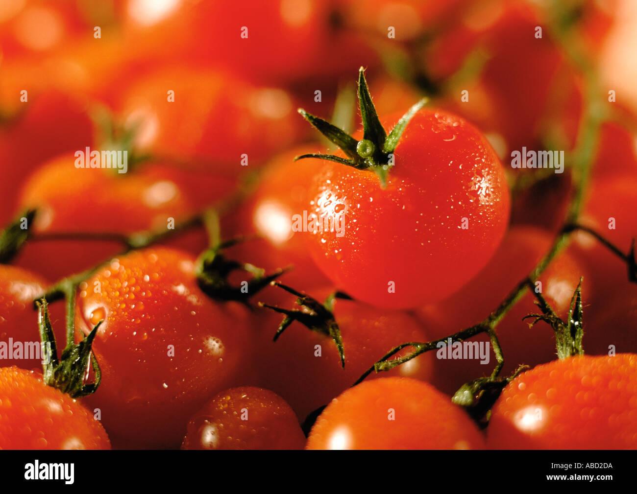Fresh tomatoes on the vine - Stock Image