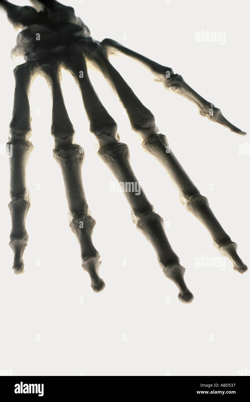 Skeletal Hand Stock Photos Skeletal Hand Stock Images Alamy
