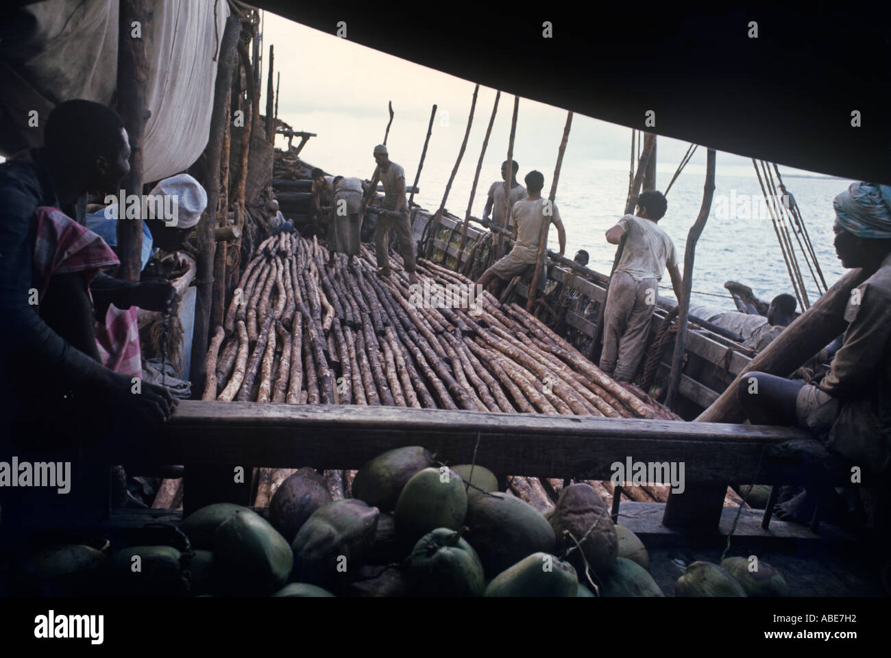 With one man at left keeping score--a knot for every 20 poles--a dhow slowly fills with a homebound cargo of mangrove poles - Stock Image