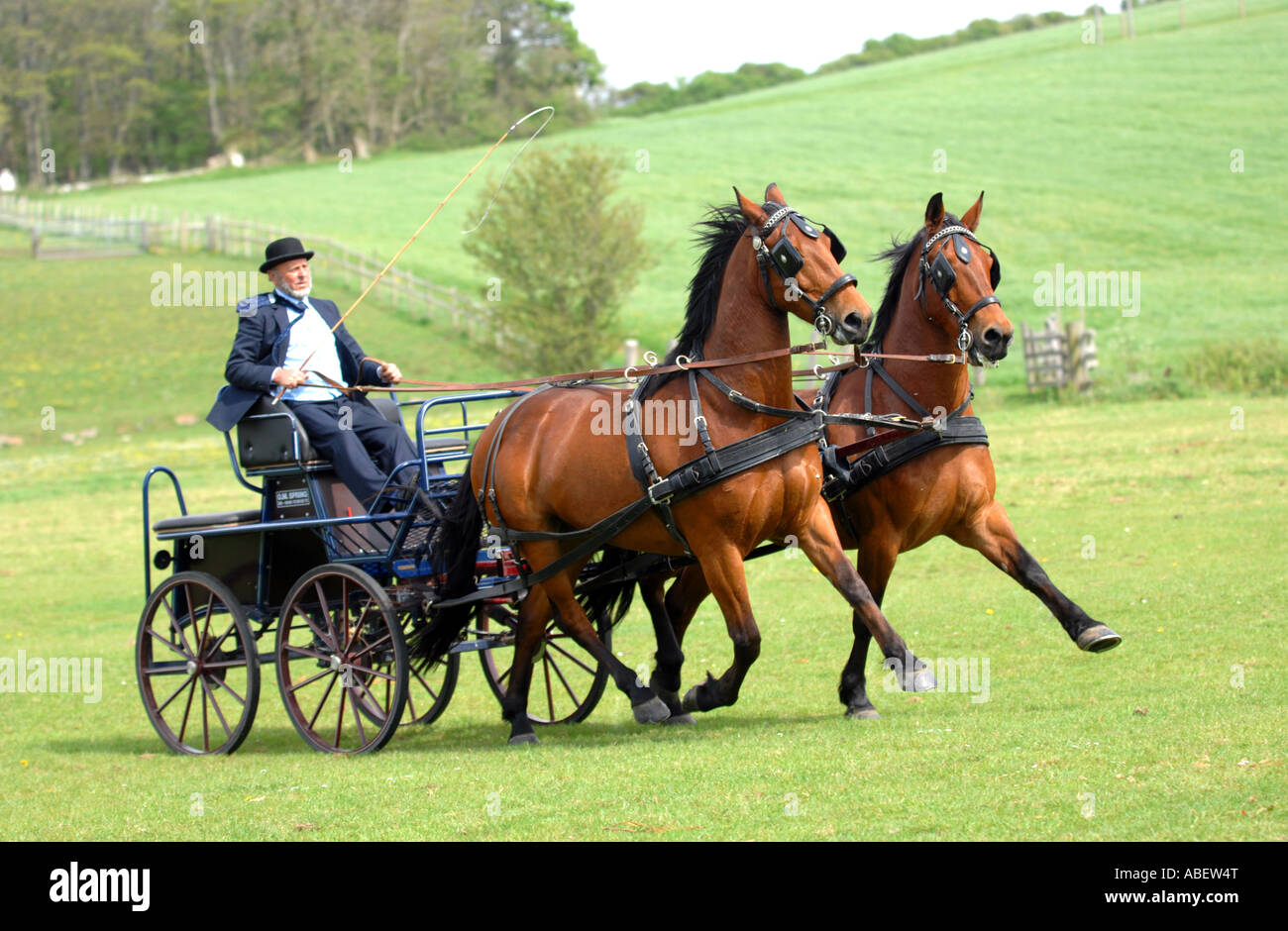 Horse and carriage - Stock Image