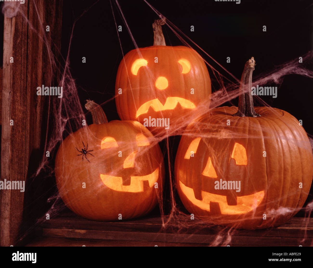 Horizontal of three illuminated Jack O Lanterns with a spider and spider webs - Stock Image