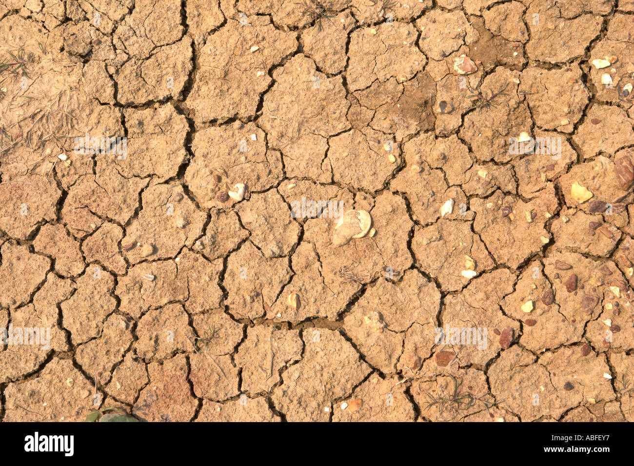 drought dry cracked scorched earth - Stock Image