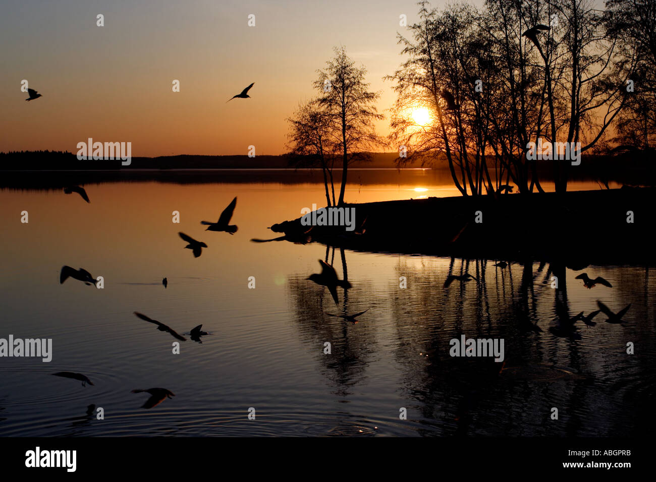 Birds and Sunset - Stock Image