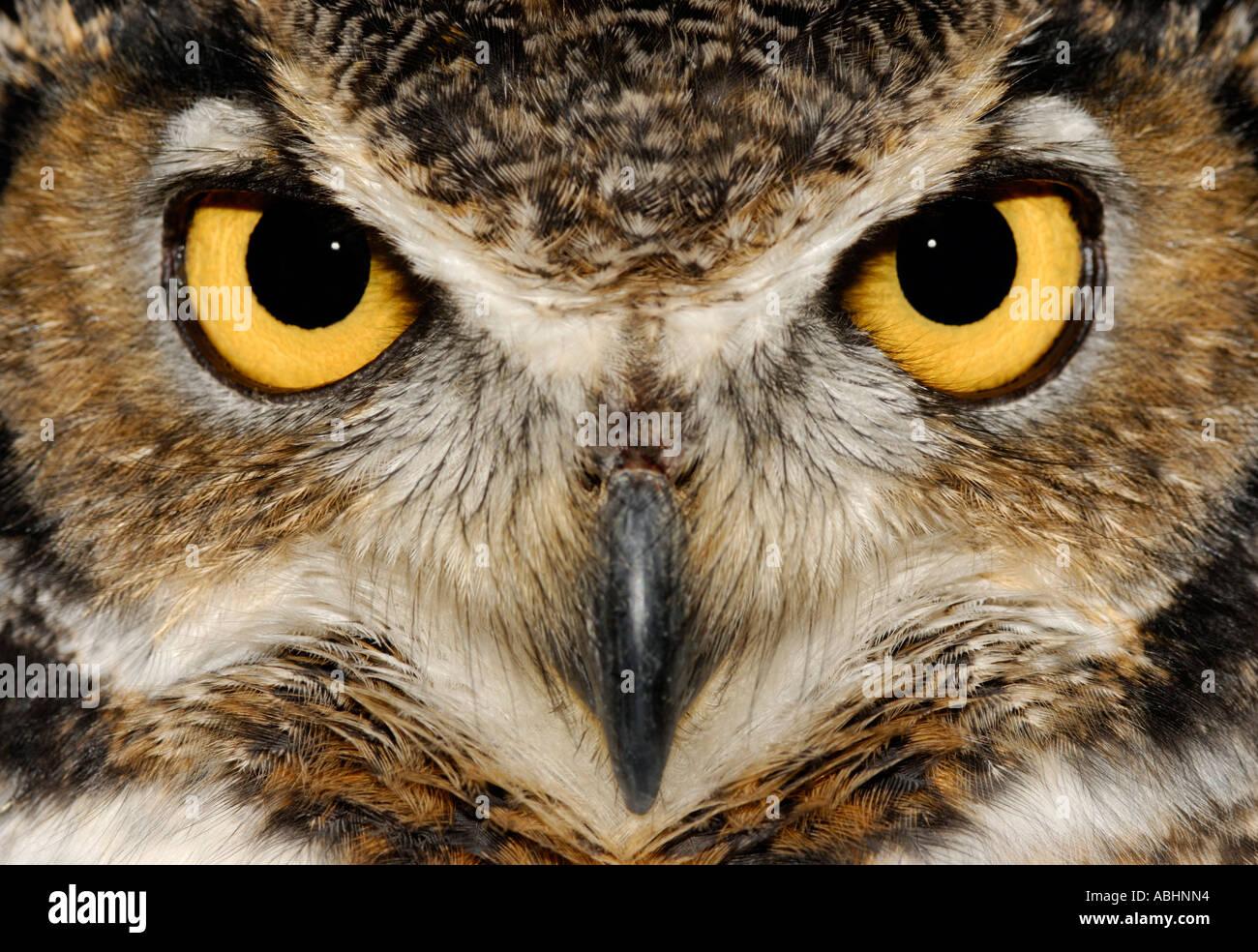 Owl Face Stock Photos & Owl Face Stock Images - Alamy