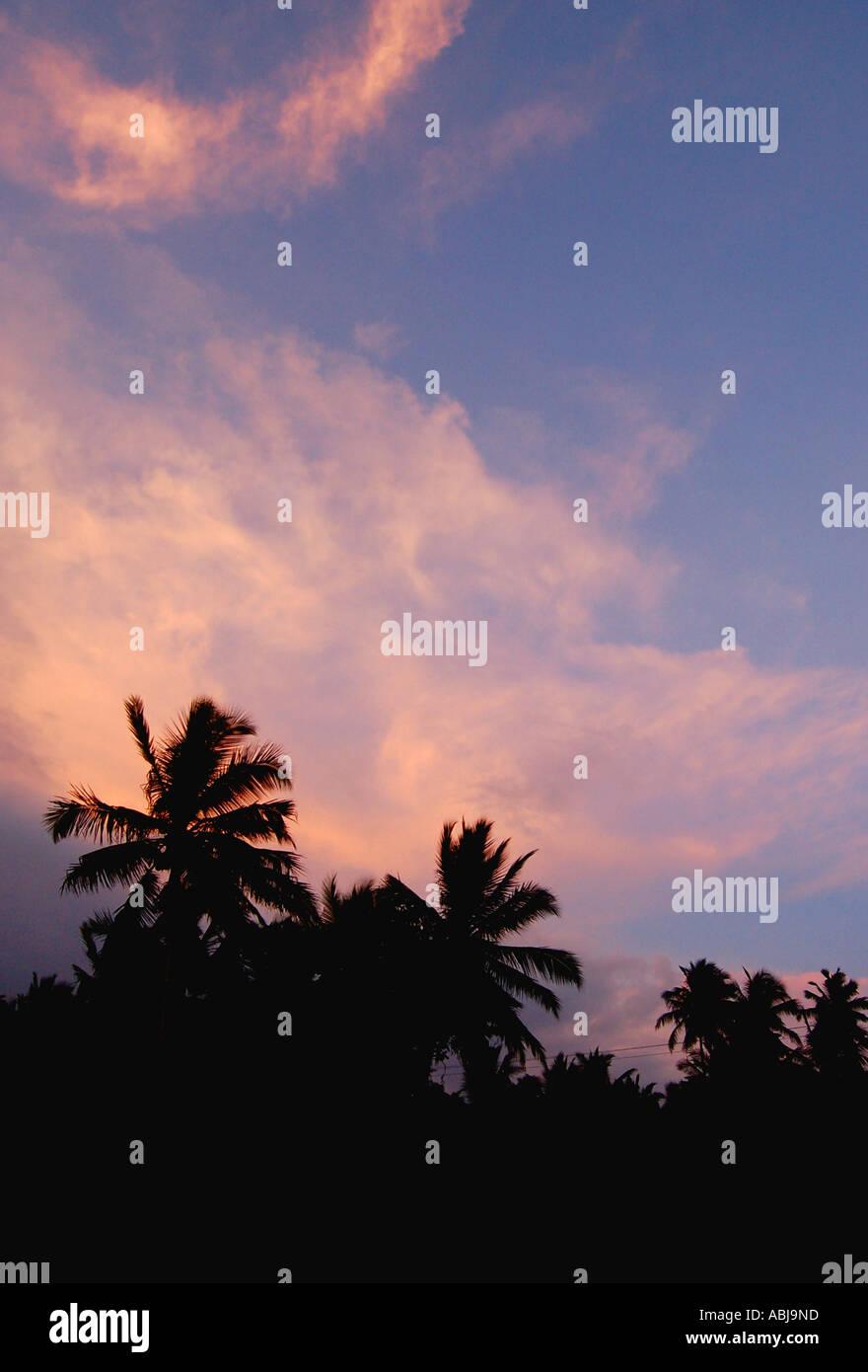 Palmtrees at sunset - Sri Lanka Stock Photo