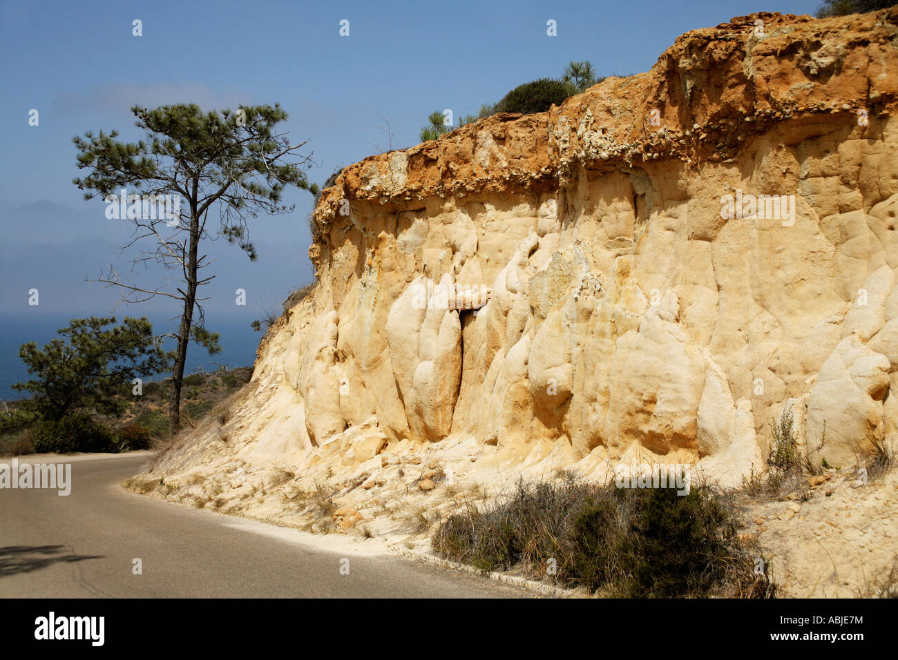 tock Photo of Sculptured Sandstone Cliffs at Torrey Pines State Reserve, CA - Stock Image