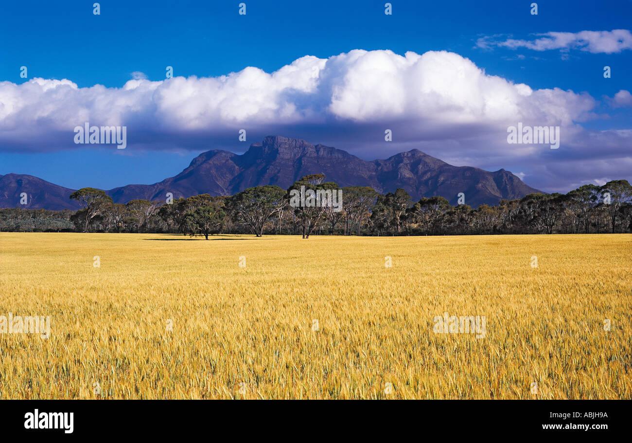 Bluff Knoll Sterling Range National Park Western Australia - Stock Image