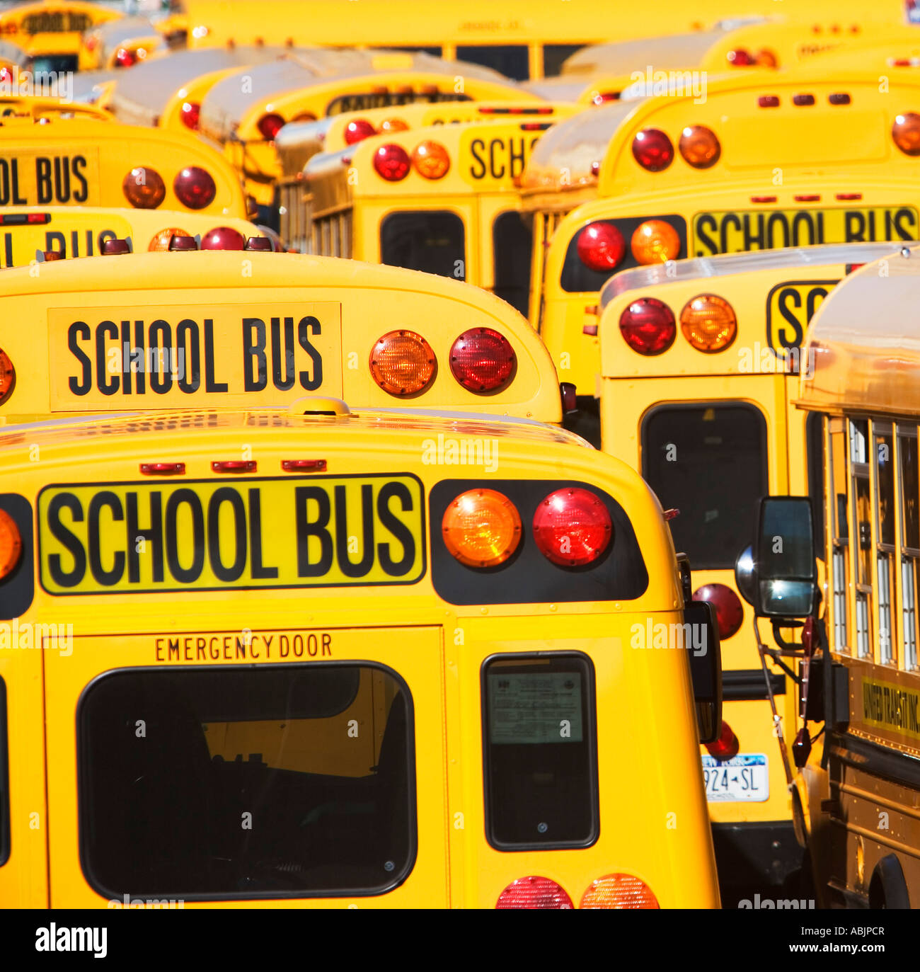 School buses parked in lines Stock Photo