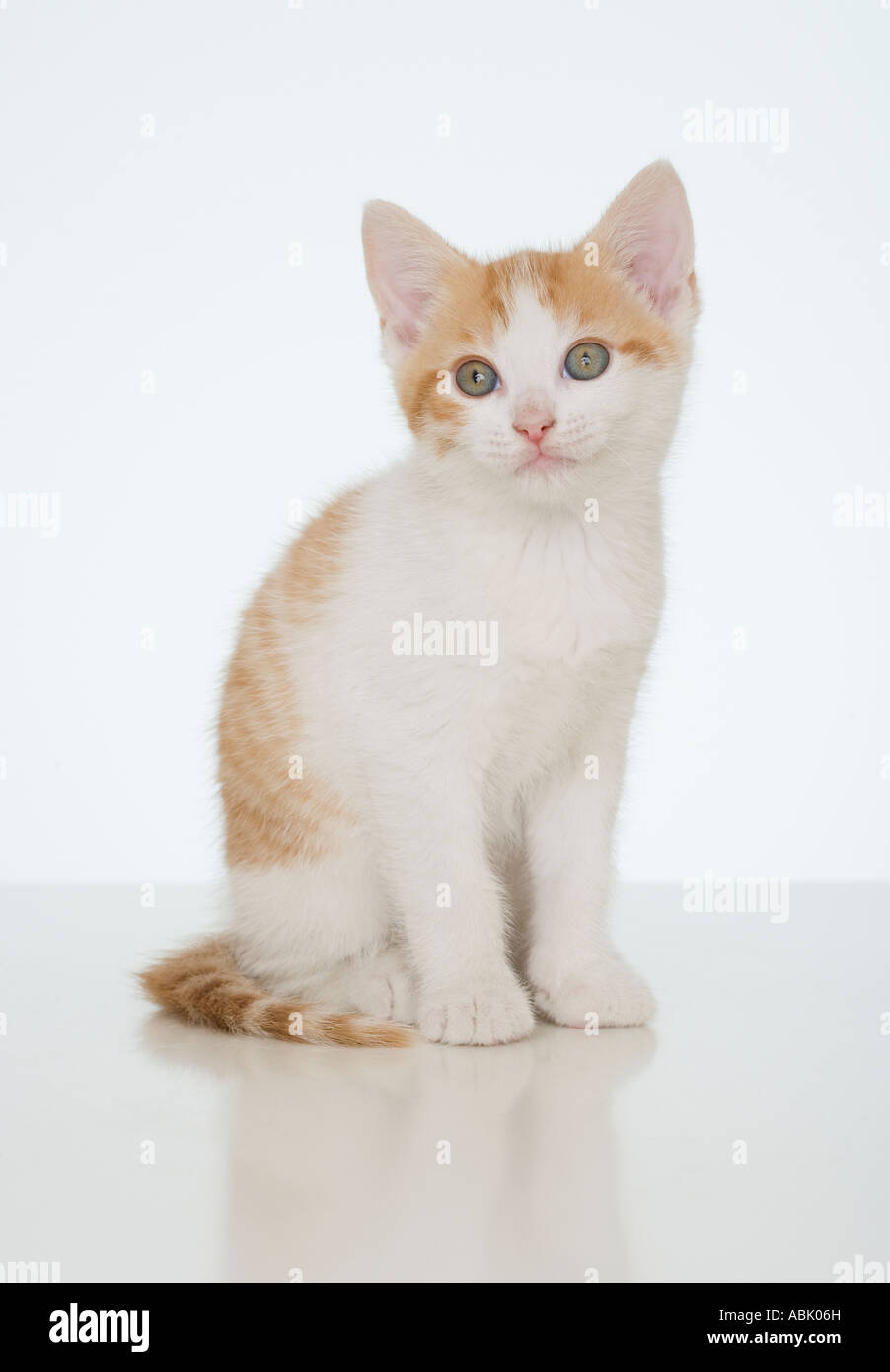 Studio shot of kitten - Stock Image