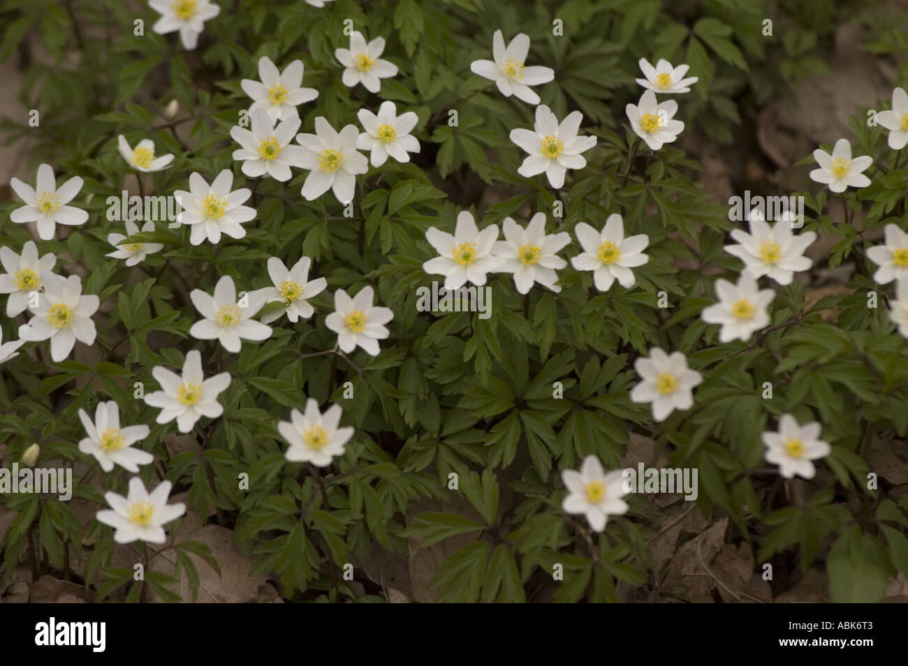 Early Spring White Flowers Gallery Flower Decoration Ideas