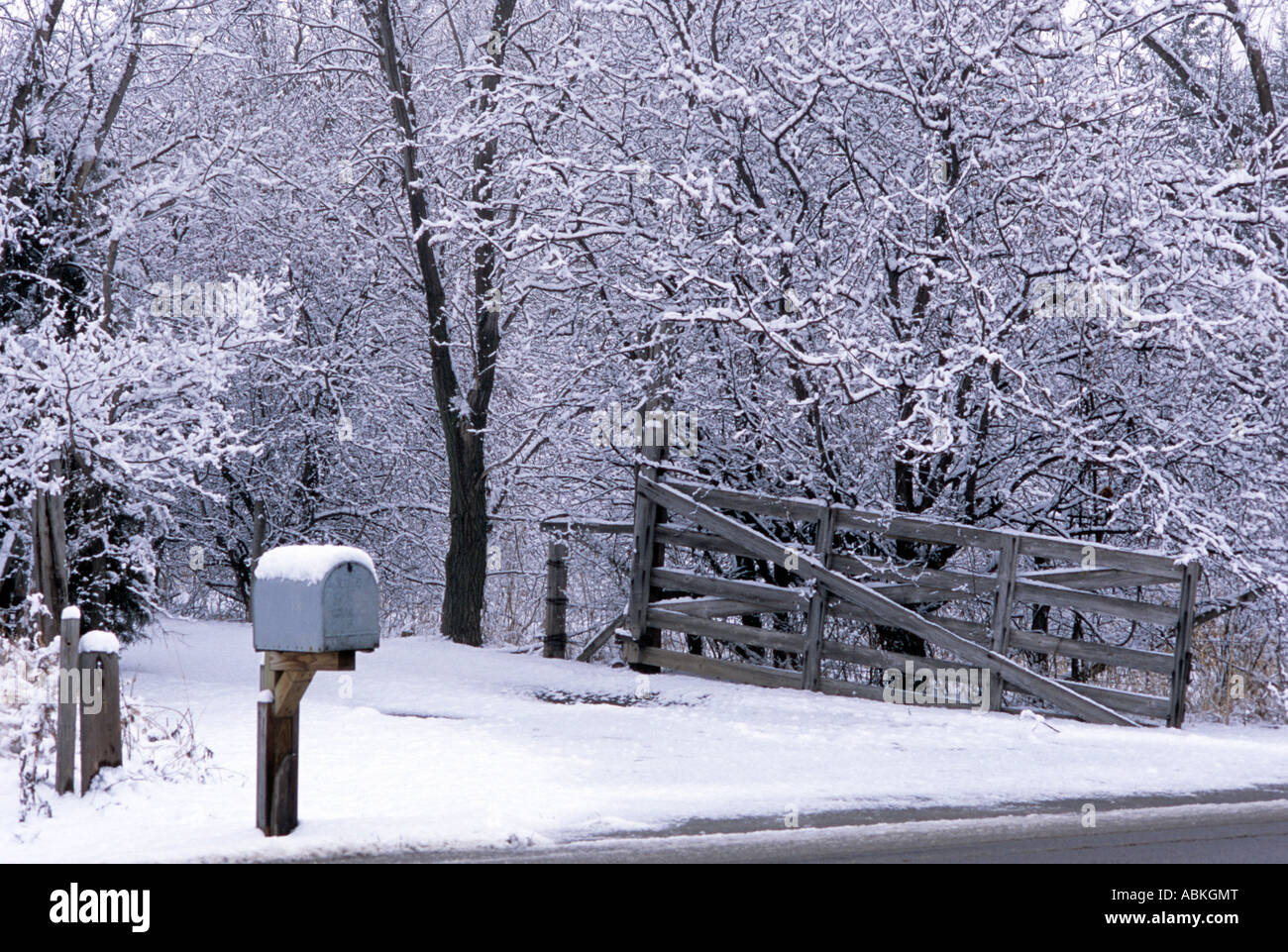 snow covered driveway and mailbox in white bear lake minnesota