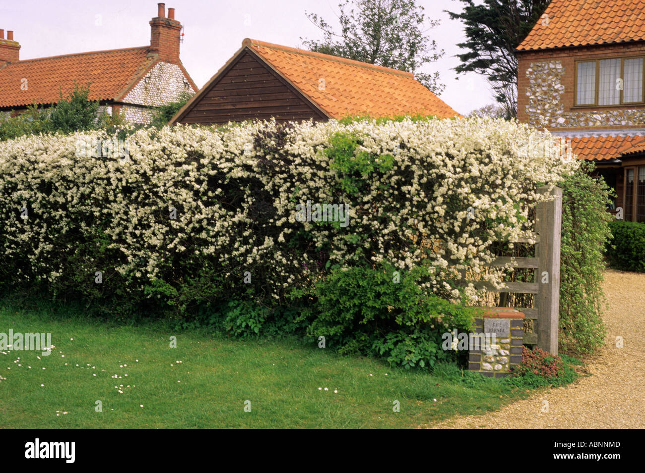 Fancy Hedge With White Flowers Ornament - Best Evening Gown ...
