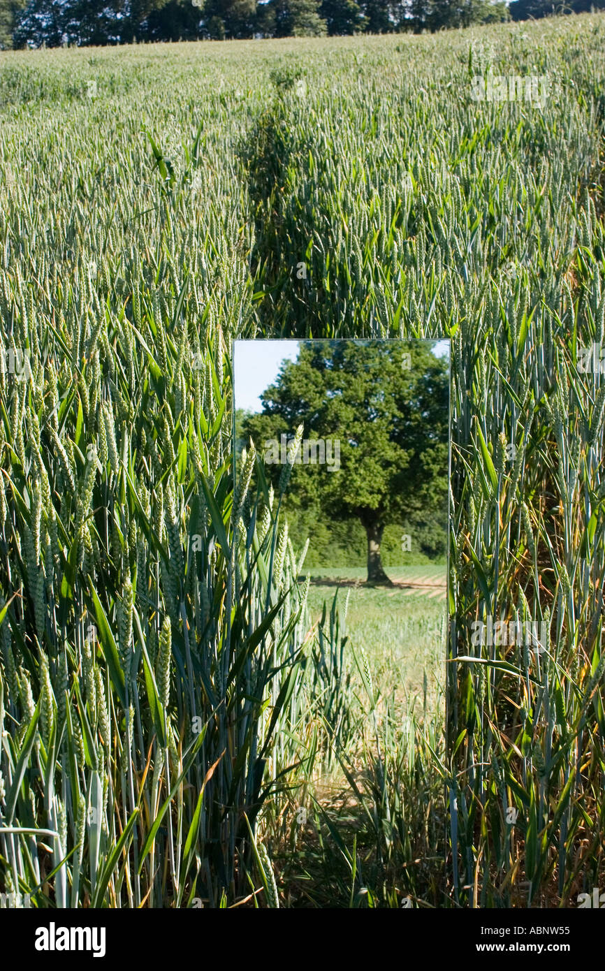 Country side reflection in a mirror in a wheat field  in Kent UK - Stock Image